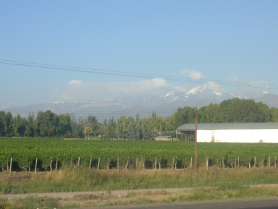 Vineyards in Mendoza